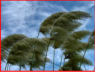 Picture of wind